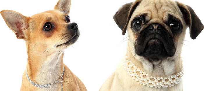 Honden halsbanden met naam letters, Pet collars with rhinestone letters chihuahua collars, dog necklaces
